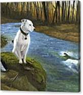 Bo At The Patapsco Canvas Print