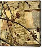 Boarded Windows And Branches Canvas Print