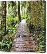 Boardwalk On The Rainforest Trail In Canvas Print