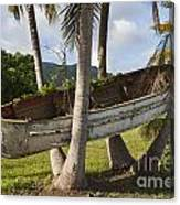 Boat In A Tree Puerto Rico Canvas Print
