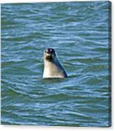Bobbing In The Water Canvas Print