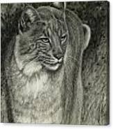 Bobcat Emerging Canvas Print