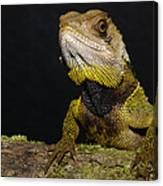 Bocourts Dwarf Iguana Choco Rainforest Canvas Print