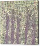 Bog Forms Through Fog  Canvas Print