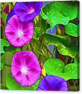 Bohemian Garden Morning Glory Canvas Print