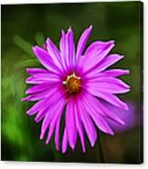 Bohemian Garden Pink Canvas Print