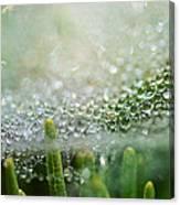 Bokeh And Bubbles Canvas Print