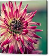 Bokehlicious Flower Canvas Print