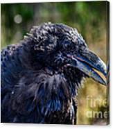 Bold And Demanding Raven Canvas Print