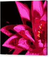Bold Lily Canvas Print