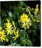Bold Yellow Flowers Canvas Print