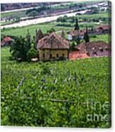 Bolzano Vineyard  Canvas Print