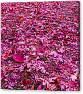 Pink Leaves Canvas Print