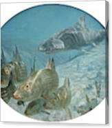 Bonefish Pursued By A Shark, 1972 Canvas Print