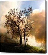 Bonfire And Olive Tree Canvas Print