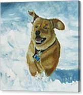 Bongo In The Snow Canvas Print
