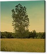 Bonner Springs Tree  Canvas Print