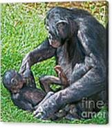 Bonobo Adult Playing With Baby Canvas Print