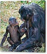 Bonobo Adult Talking To Juvenile Canvas Print