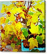 Bonsai Tree With Yellow Leaves Canvas Print