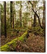 Boranup Forest - Western Australia Canvas Print