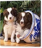 Border Collie Puppies In Plant Pot Canvas Print