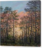 Border Pines Canvas Print