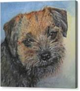 Border Terrier Jack Canvas Print