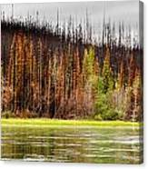 Boreal Forest At Yukon River Destroyed By Fire Canvas Print