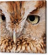 Boreal Owl Eyes  Canvas Print