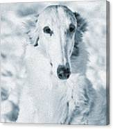 Borzoi Russian Hound Portrait Canvas Print
