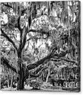 Bosque Bello Oak Canvas Print