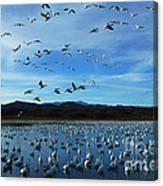Bosque Del Apache Flight Line Canvas Print
