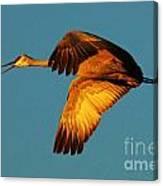 Bosque Del Apache Sandhill Crane Golden Light Canvas Print