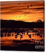 Bosque Del Apache Sunrise 1 Canvas Print