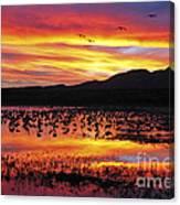 Bosque Sunset II Canvas Print