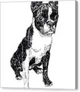 Boston Bull Terrier Canvas Print