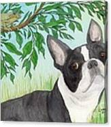 Boston Terrier Dog Tree Frog Cathy Peek Art Canvas Print