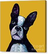 Boston Terrier On Yellow Canvas Print