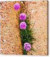 Botanica Series - Flowers In The Crack Canvas Print