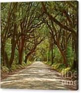 Botany Bay Road On Edisto Island Canvas Print