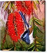 Bottle Brush And Wren Canvas Print