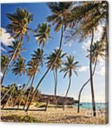 Bottom Bay Beach In Barbados Caribbean Canvas Print