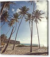 Bottom Bay Tropical Beach In Barbados Caribbean Canvas Print