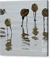 Shorebirds 1 Canvas Print