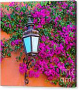 Bougainvillea And Lamp, Mexico Canvas Print