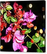 Bougainvillea Canvas Print
