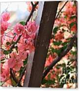 Bougainvillea On Trellis Canvas Print