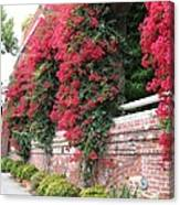 Bougainvillea Wall In San Francisco Canvas Print