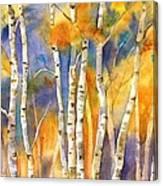 Boulder Aspens Canvas Print